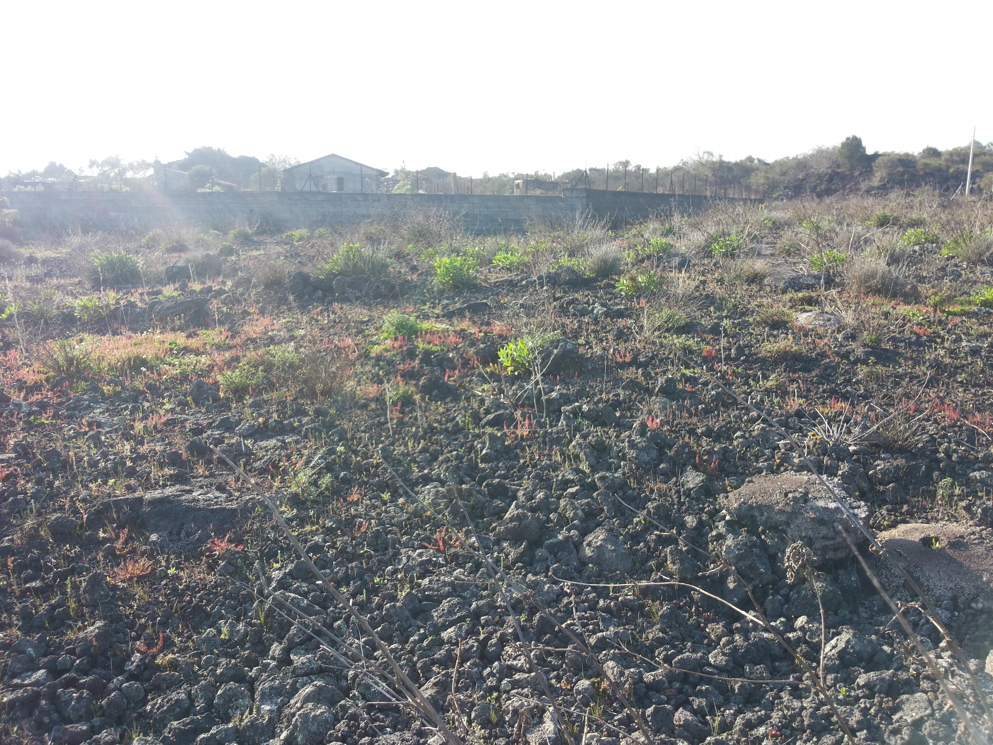 Terreno Agricolo 1800 mq