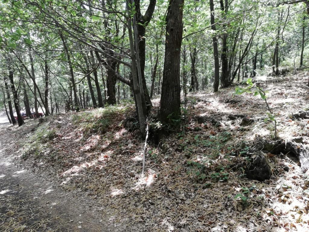Terreno 9000 mq con rudere semi demolito immerso nel bosco Zona parco protetto ETNA